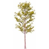 白桦树造型,3米和6米规格,绿光和黄光两个规格,工程需要