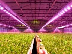 植物照明产业研究:行业发展迅速,未来增长空间巨大
