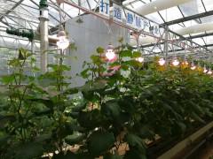 植物补光设备行业发展驱动因素及机遇挑战分析